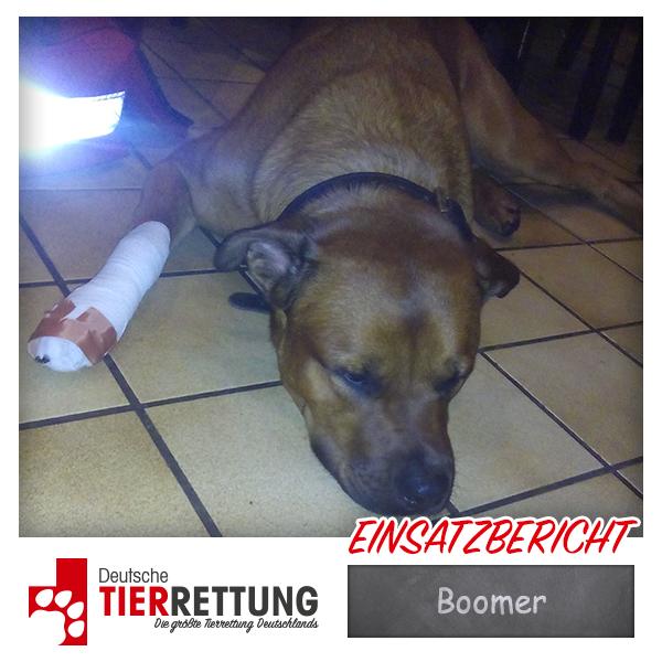 Tierrettung Einsatz: Boomer in Duisburg