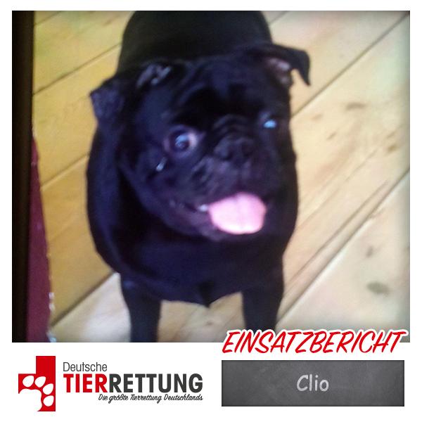 Tierrettung Einsatz: Clio in Oberhausen
