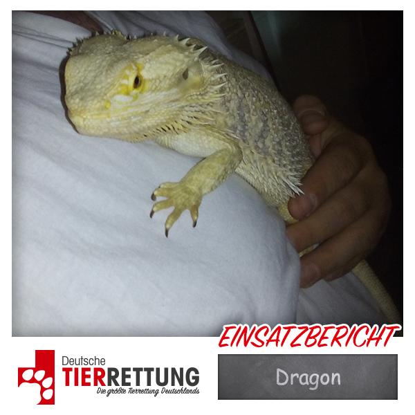 Tierrettung Einsatz: Dragon in Hamm