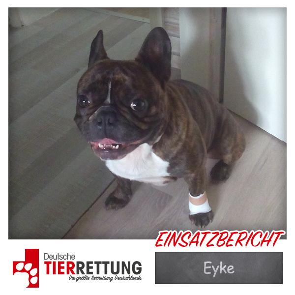 Tierrettung Einsatz: Eyke in Bochum