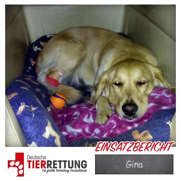 Tierrettung Einsatz: Gina in Gladbeck