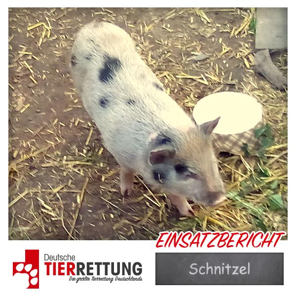Tierrettung Einsatz: Schnitzel in Dortmund