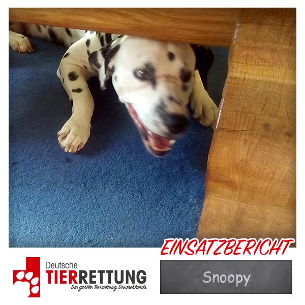 Tierrettung Einsatz: Snoopy in Dortmund
