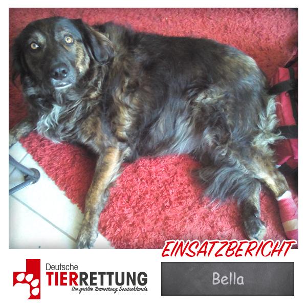 Tierrettung Einsatz: Bella in Dortmund