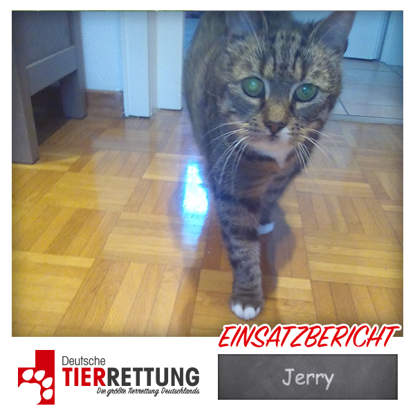 Tierrettung Einsatz: Jerry in Dorsten