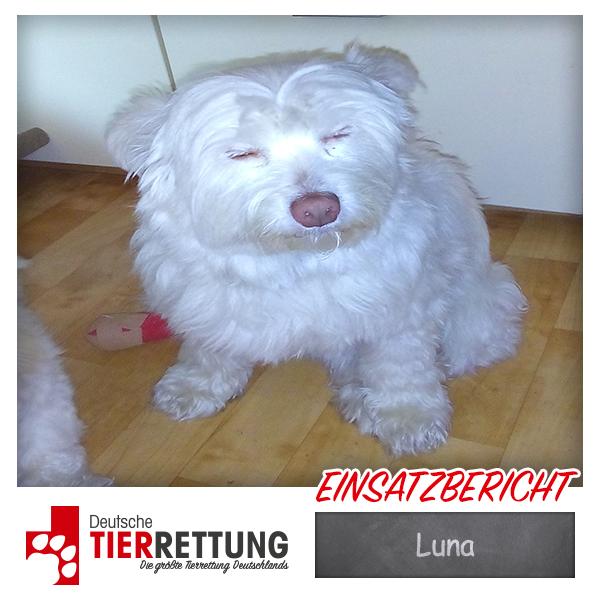 Tierrettung Einsatz: Luna in Krefeld