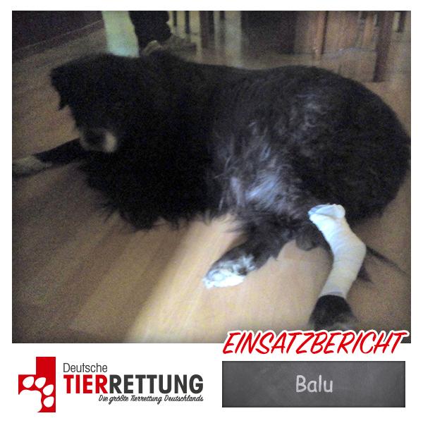 Tierrettung Einsatz: Balu in Datteln
