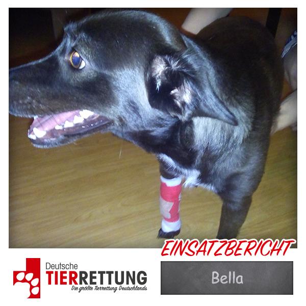 Tierrettung Einsatz: Bella in Mönchengladbach
