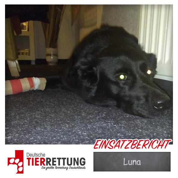 Tierrettung Einsatz: Luna in Mönchengladbach
