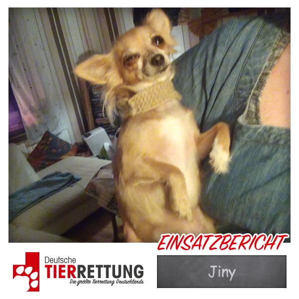 Tierrettung Einsatz: Jiny in Castrop-Rauxel
