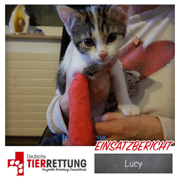 Tierrettung Einsatz: Lucy in Gelsenkirchen