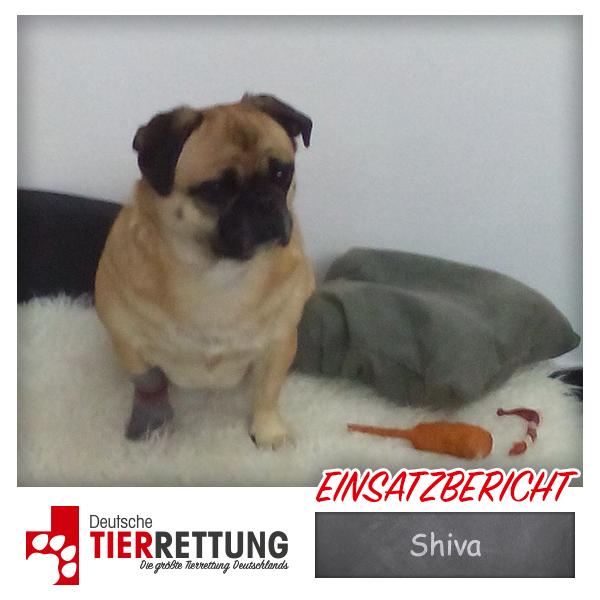 Tierrettung Einsatz: Shiva in Hamm