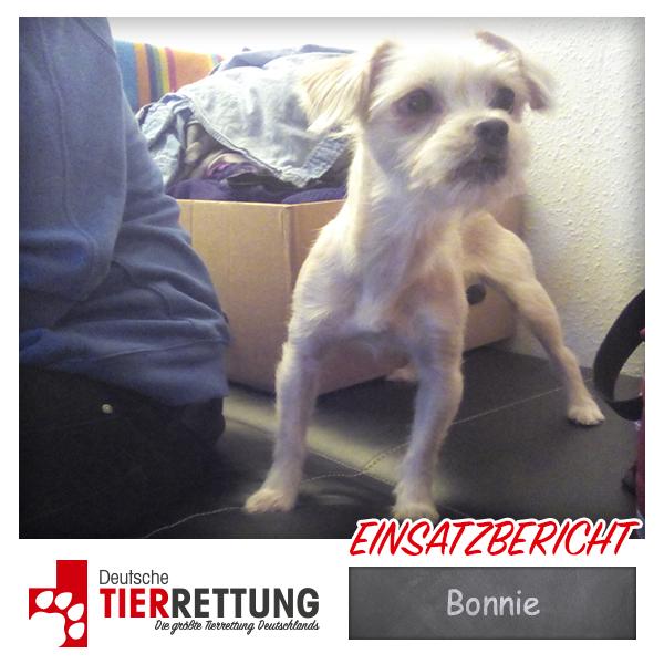 Tierrettung Einsatz: Bonnie in Essen