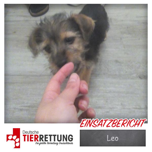 Tierrettung Einsatz: Leo in Herne