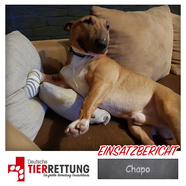 Tierrettung Einsatz: Chapo in Velbert