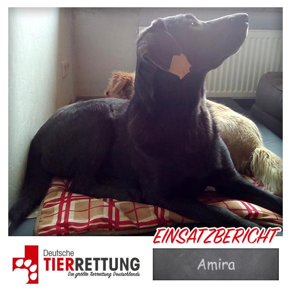 Tierrettung Einsatz: Amira in Dortmund