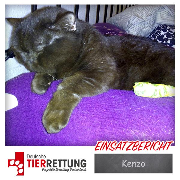 Tierrettung Einsatz: Kenzo in Dortmund