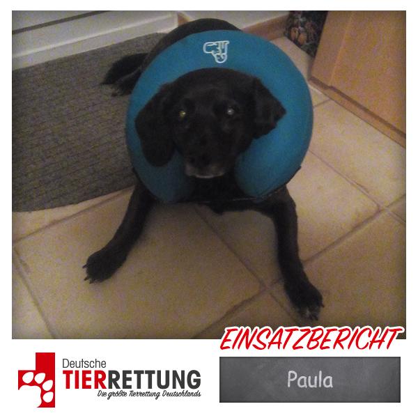 Tierrettung Einsatz: Paula in Bochum