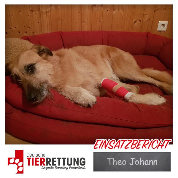 Tierrettung Einsatz: Theo Johann in Oberhausen