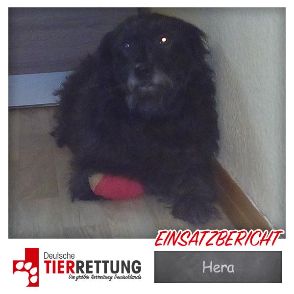 Tierrettung Einsatz: Hera in Dortmund