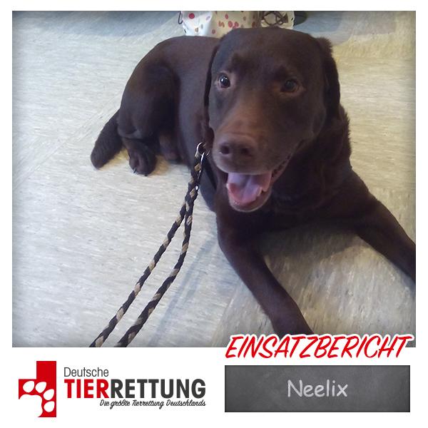 Neelix