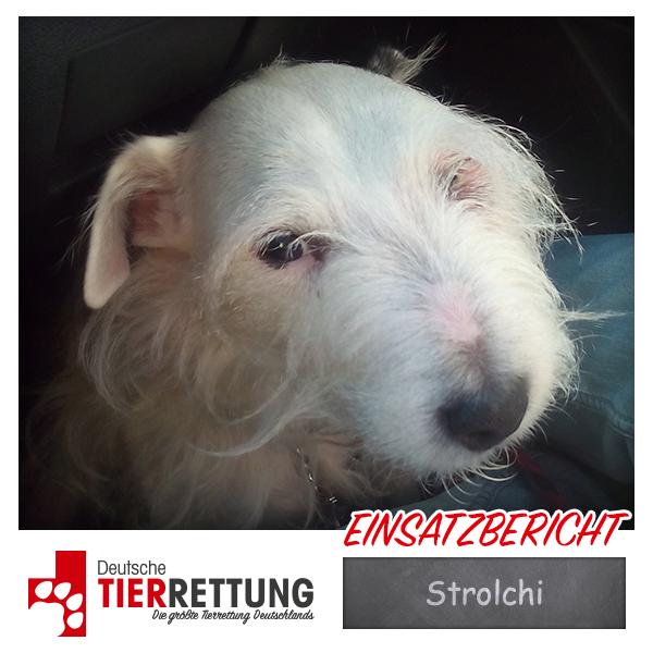Strolchi