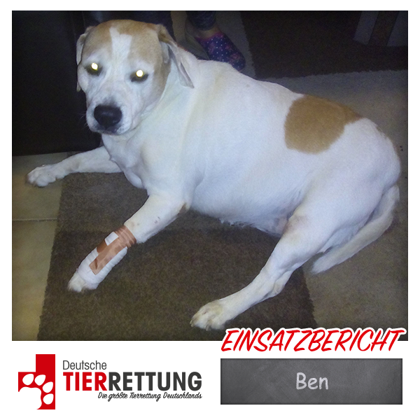 Tierrettung Einsatz: Ben in Gelsenkirchen