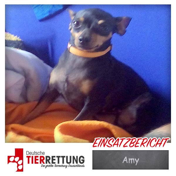 Tierrettung Einsatz: Amy in Recklinghausen