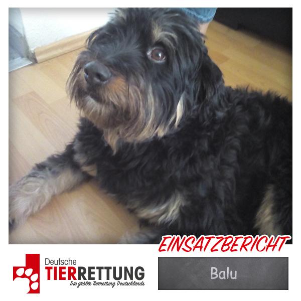 Tierrettung Einsatz: Balu in Gelsenkirchen