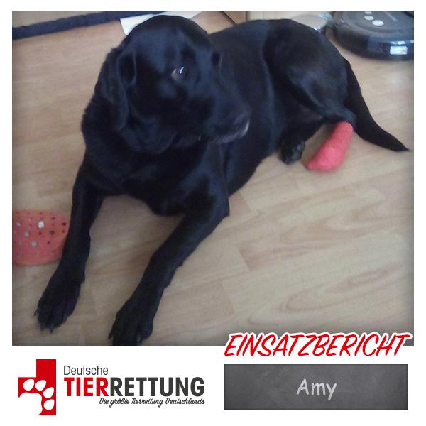 Tierrettung Einsatz: Amy in Bochum