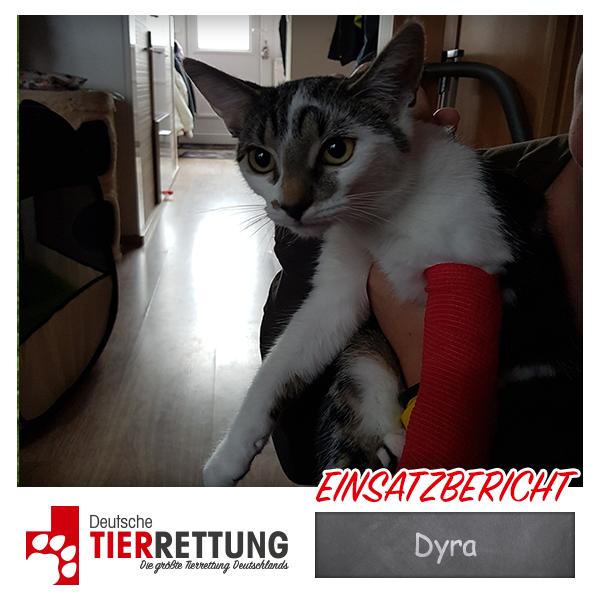 Tierrettung Einsatz: Dyra in Dortmund