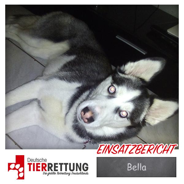 Tierrettung Einsatz: Bella in Viersen