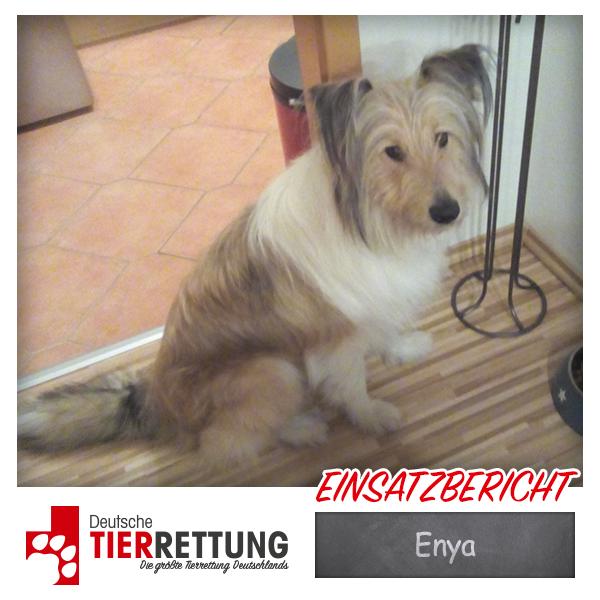 Tierrettung Einsatz: Enya in Witten
