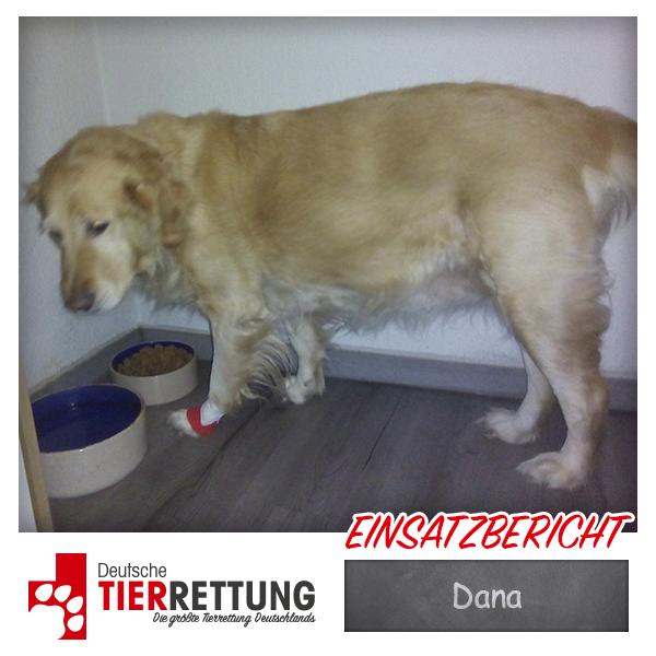 Tierrettung Einsatz: Dana in Gelsenkirchen