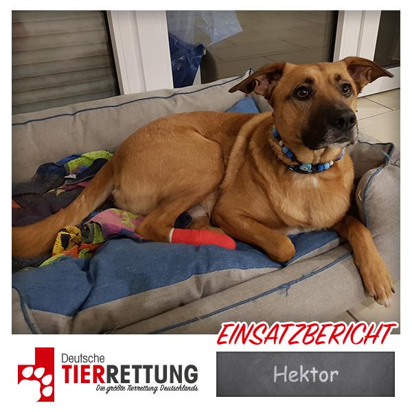 Tierrettung Einsatz: Hektor in Dinslaken