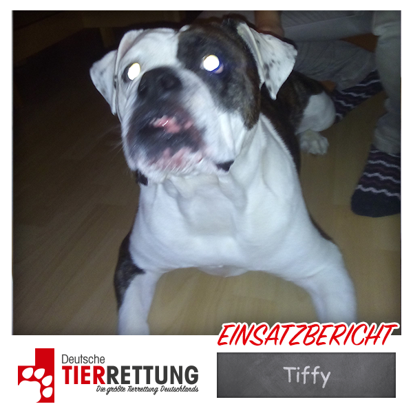 Tierrettung Einsatz: Tiffy in Dortmund