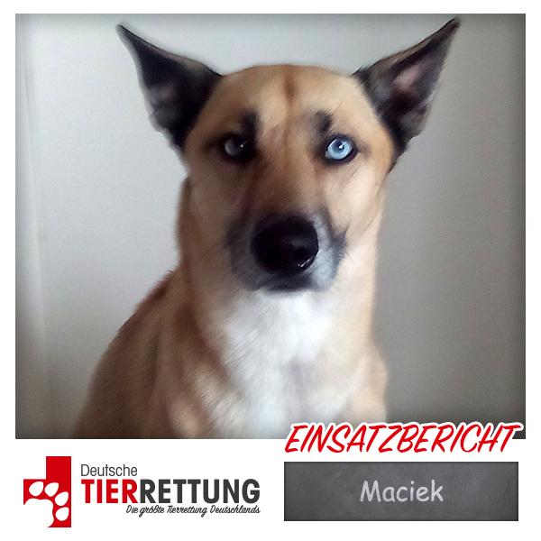 Tierrettung Einsatz: Maciek in Marl