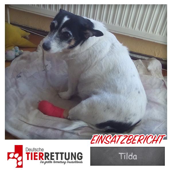 Tierrettung Einsatz: Tilda in Bochum