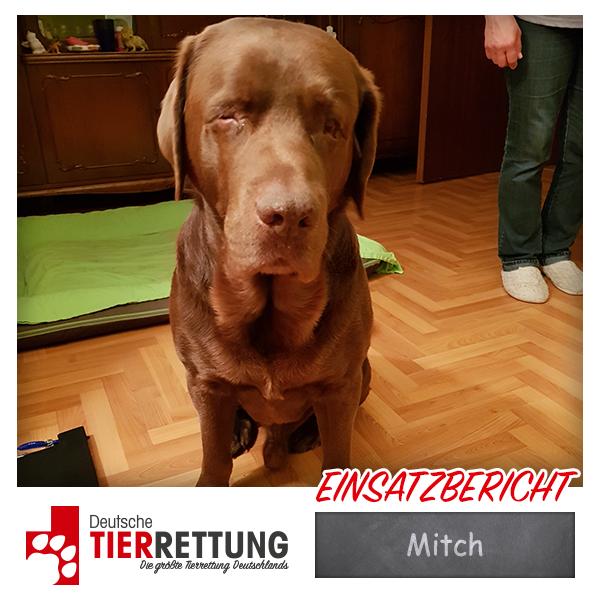 Tierrettung Einsatz: Mitch in Herne