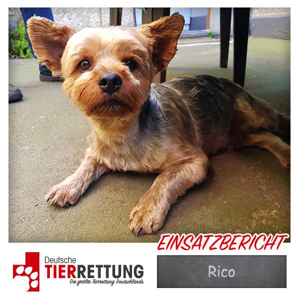 Tierrettung Einsatz: Rico in Recklinghausen