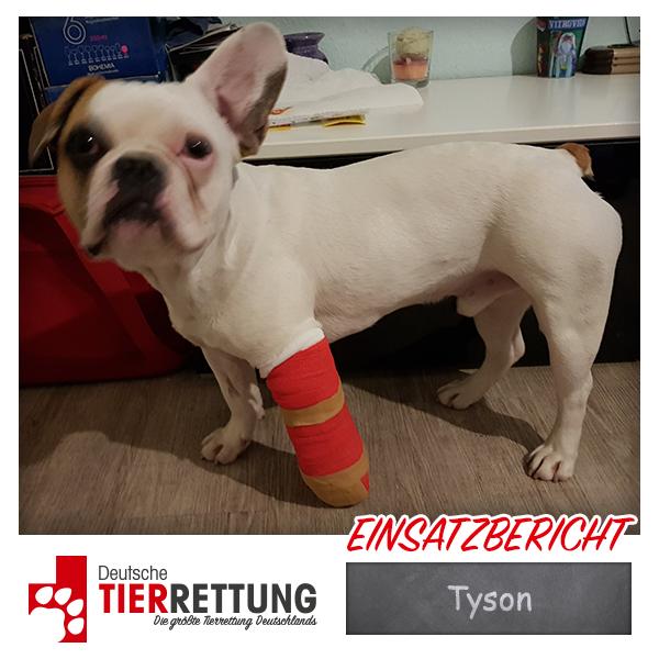 Tierrettung Einsatz: Tyson in Gelsenkirchen