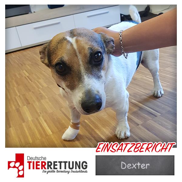 Tierrettung Einsatz: Dexter in Bochum