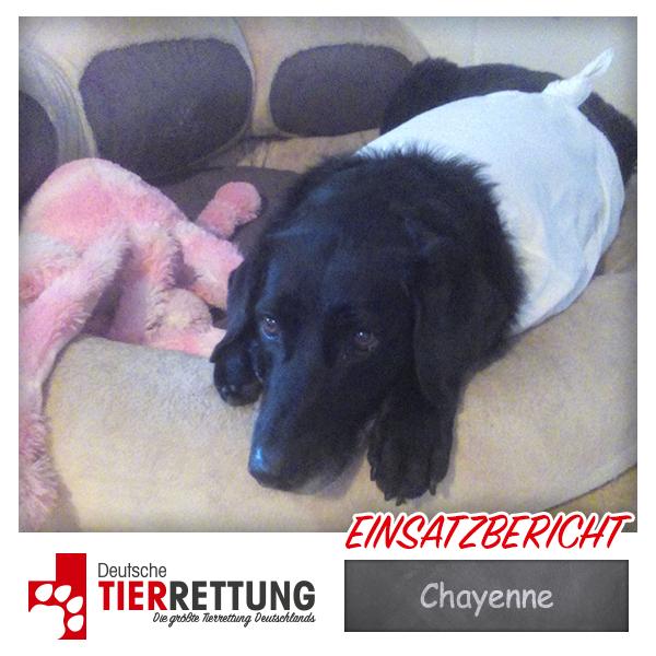 Tierrettung Einsatz: Chayenne in Witten