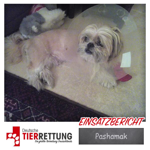 Tierrettung Einsatz: Pashamak in Essen