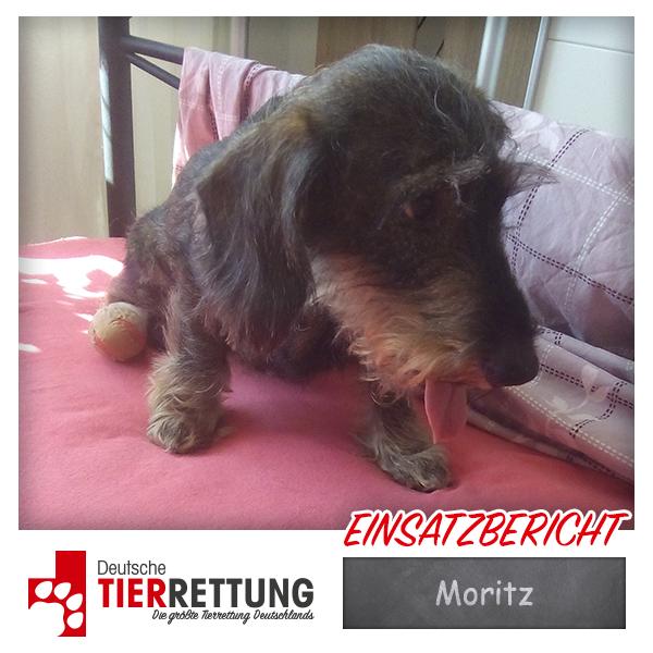 Tierrettung Einsatz: Moritz in Gelsenkirchen
