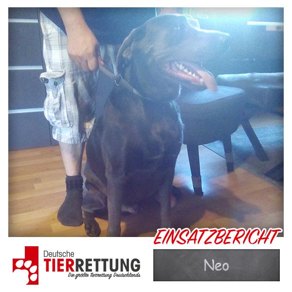 Tierrettung Einsatz: Neo in Gelsenkirchen