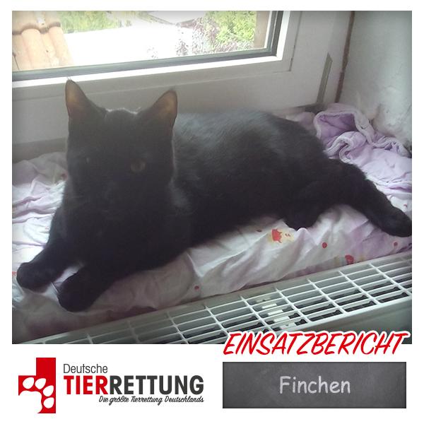 Tierrettung Einsatz: Finchen in Dortmund