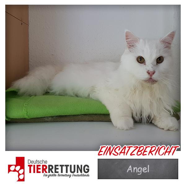 Tierrettung Einsatz: Angel in Düsseldorf