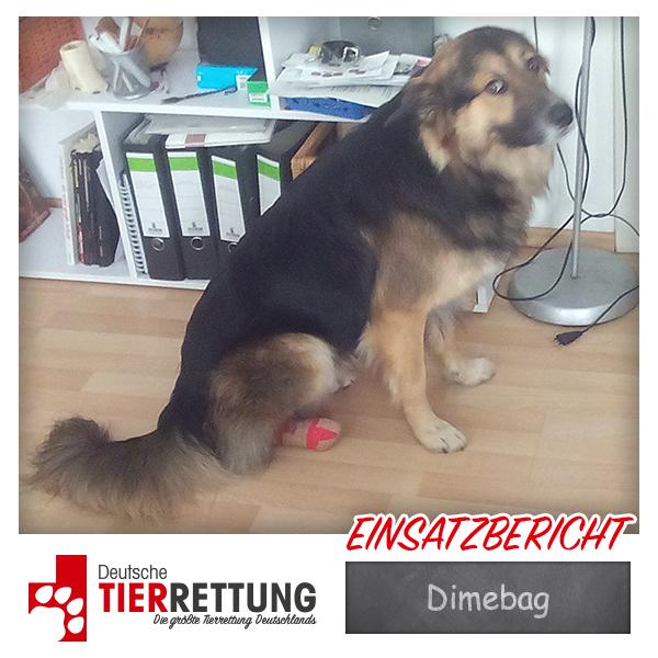 Tierrettung Einsatz: Dimebag in Wuppertal