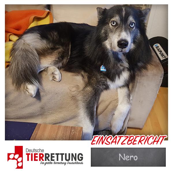 Tierrettung Einsatz: Nero in Wuppertal